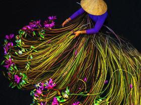 越南,睡莲收获季 | 摄影师 Trung Huy Pham 