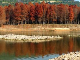 中国将现有红树林全部划入生态保护红线