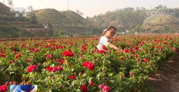 农业农村部将全面推进农业全产业链建设 扩大农民增收渠道