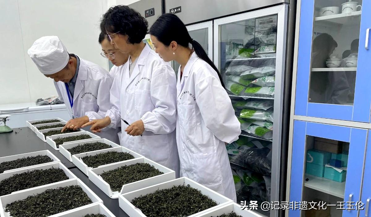 第五届全国茶业职业技能竞赛绿茶加工贵州选拔赛落幕